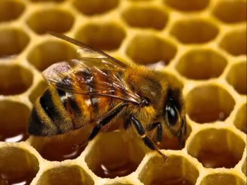 Дезинфекция сотов для пчел
